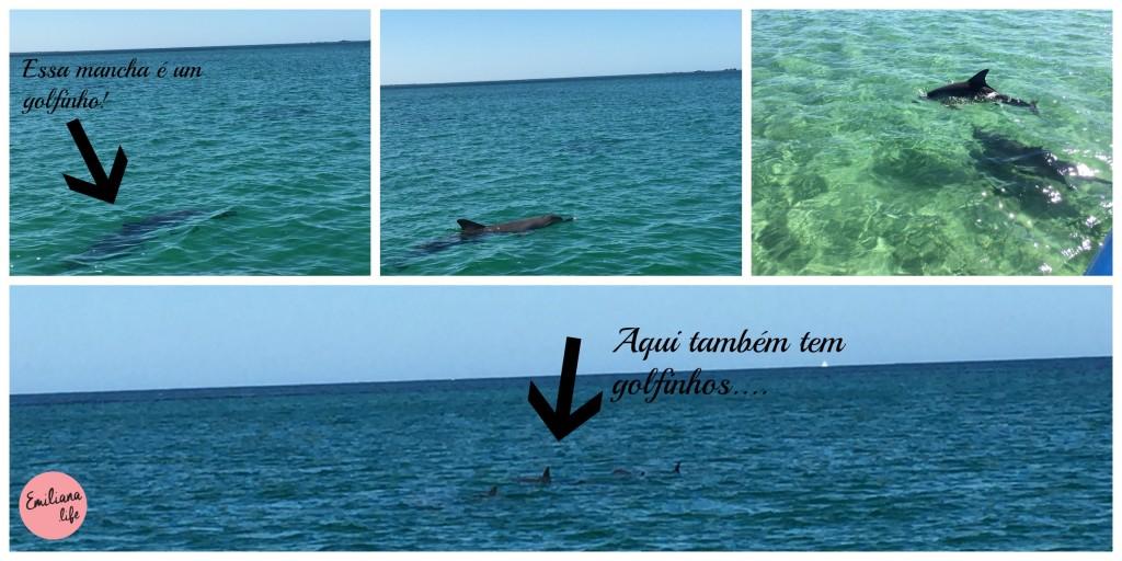 10 golfinhos