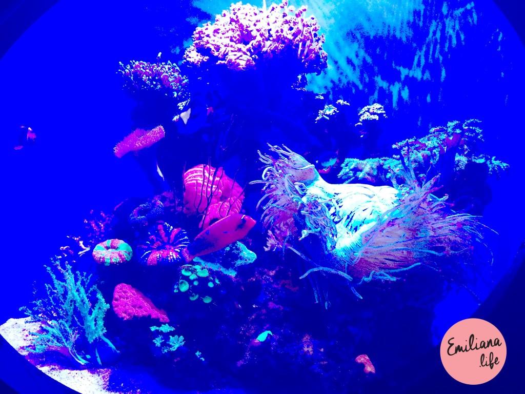 11 coral entrada aquario