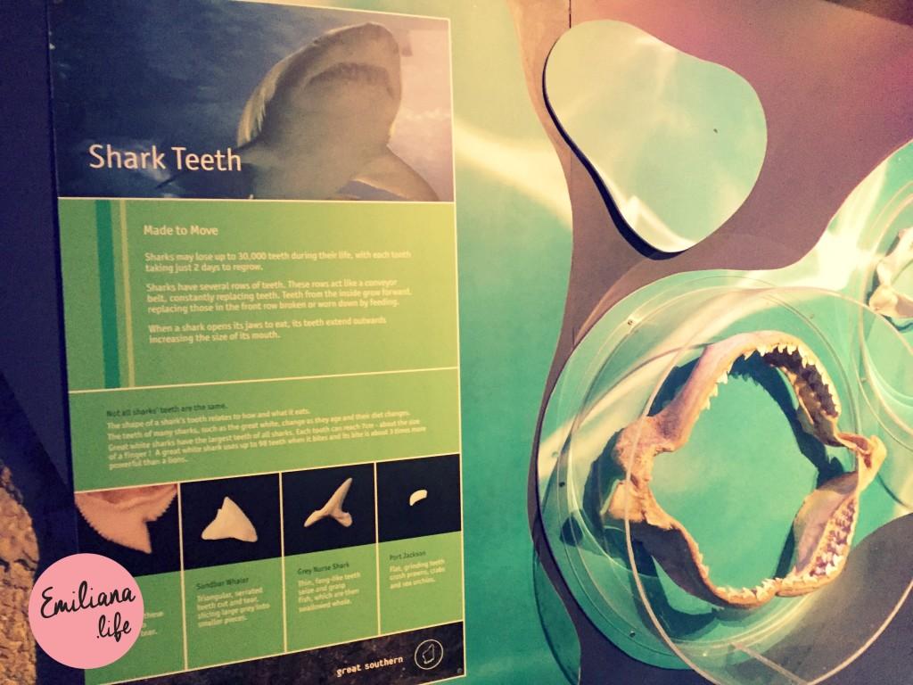 11 mural shark teeth