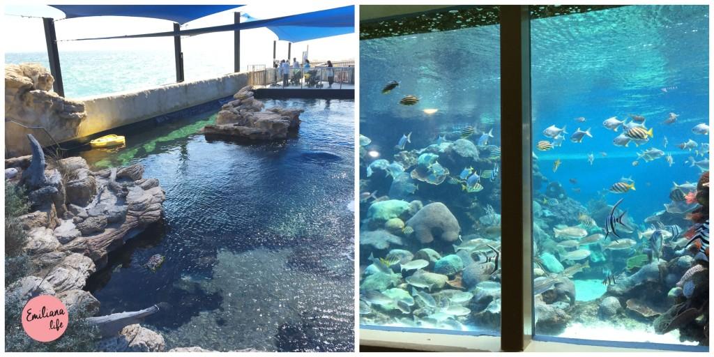 11 piscina exterior e subterraneo
