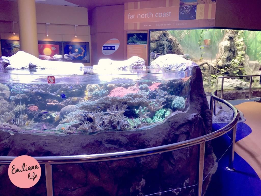 11 piscina recifes
