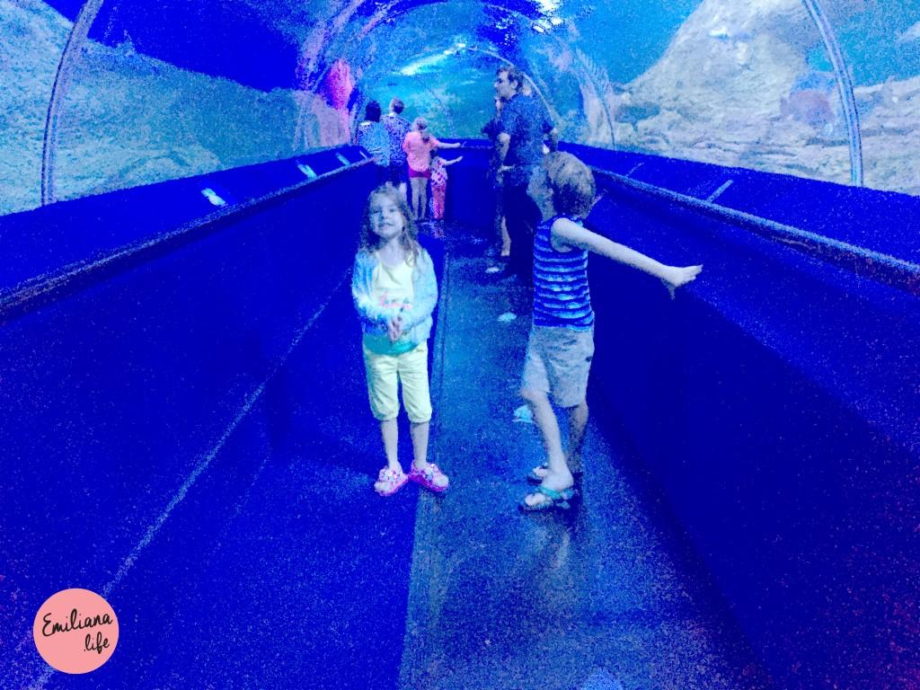 11 tunel no aquario