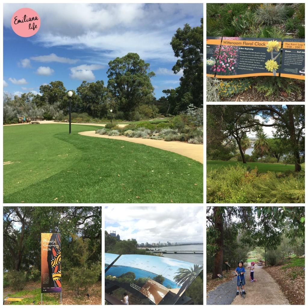 50 kings park verde