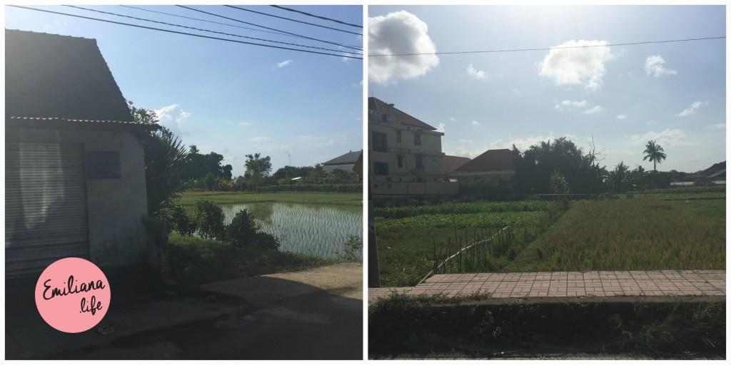 71 arroz meio casas