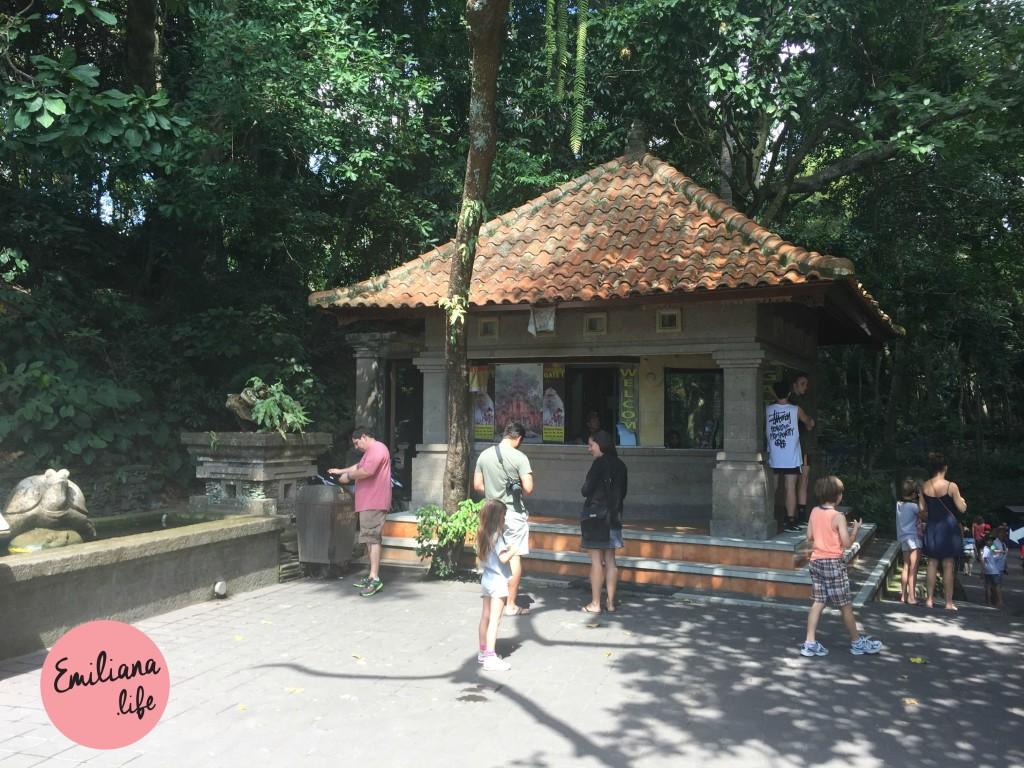 72 bilheteria floresta macacos