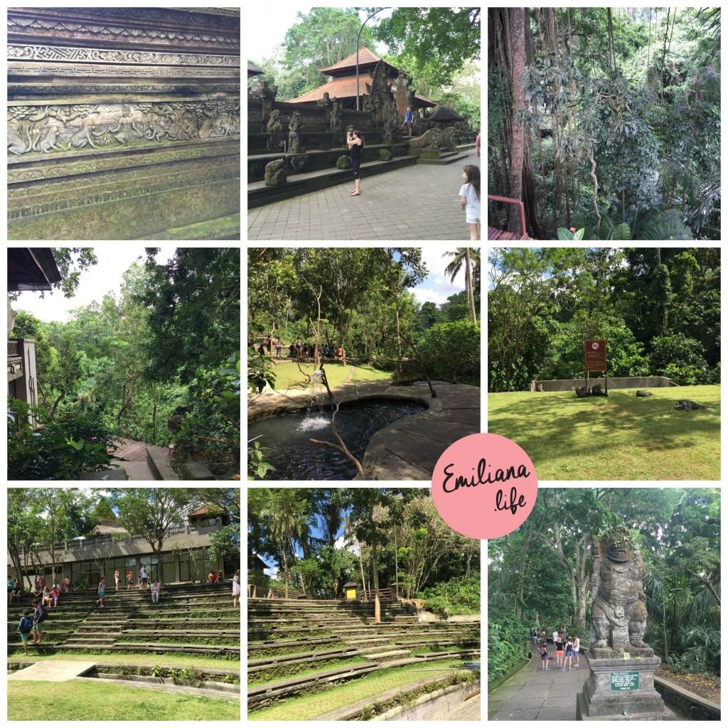 72 diversas fotos floresta macacos