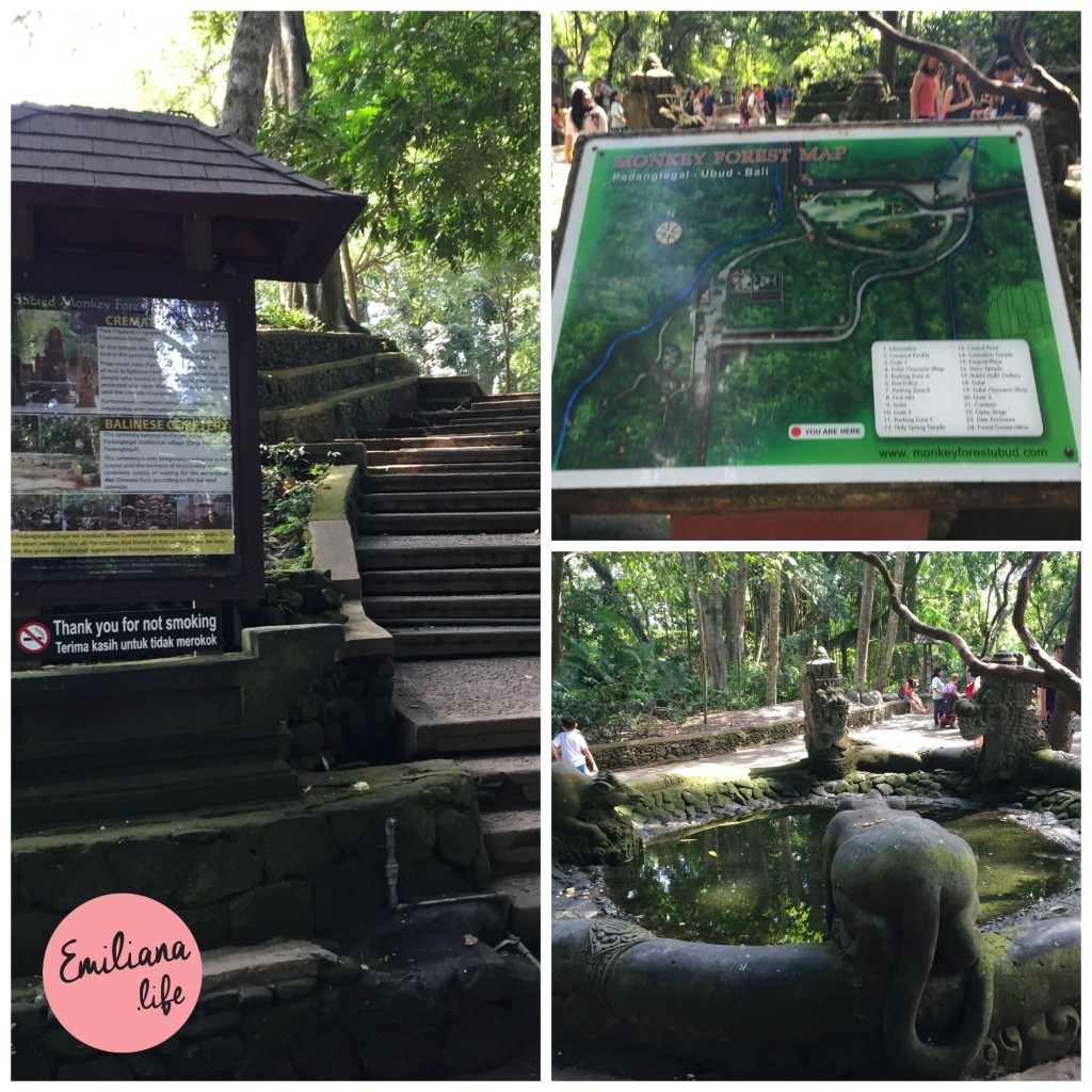 72 placas floresta macacos