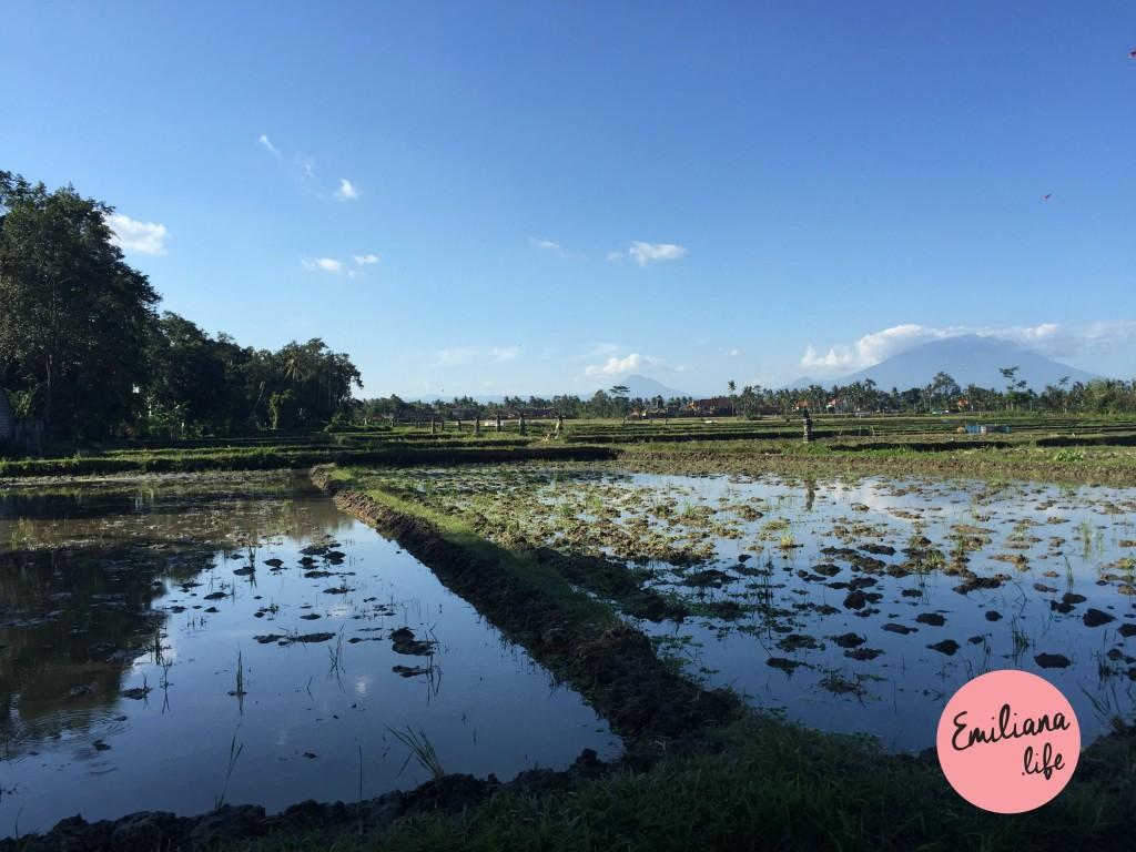 73 plantacao de arroz alagada