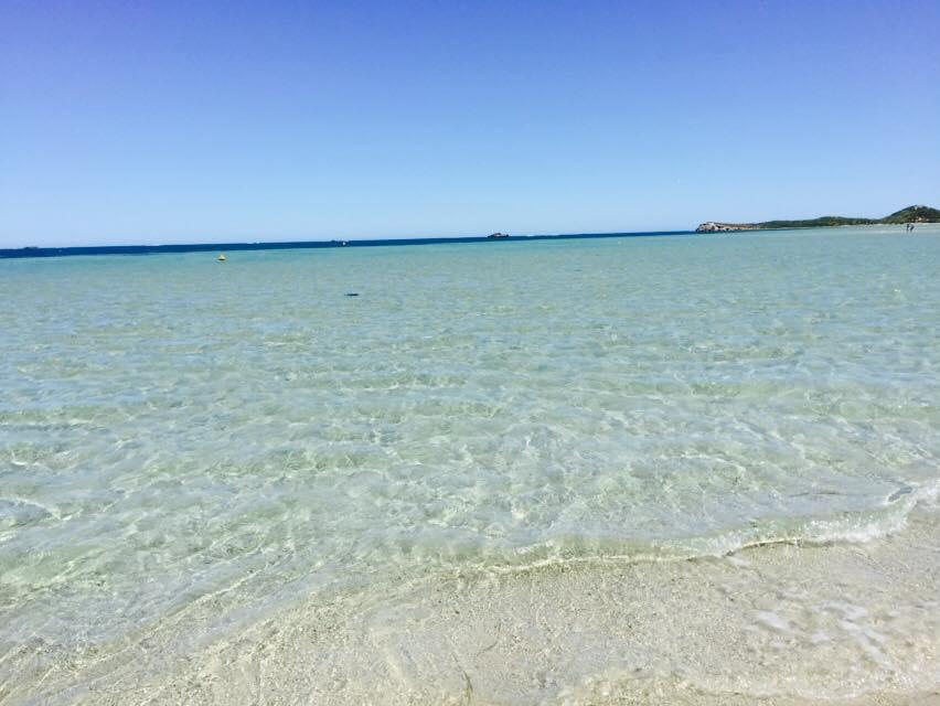 61 agua penguin island