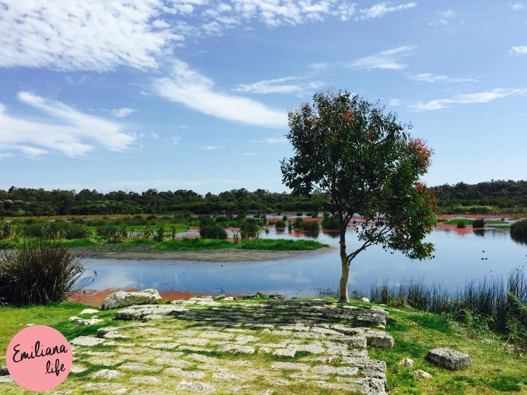 184 yanchep national park lagoa e arvore