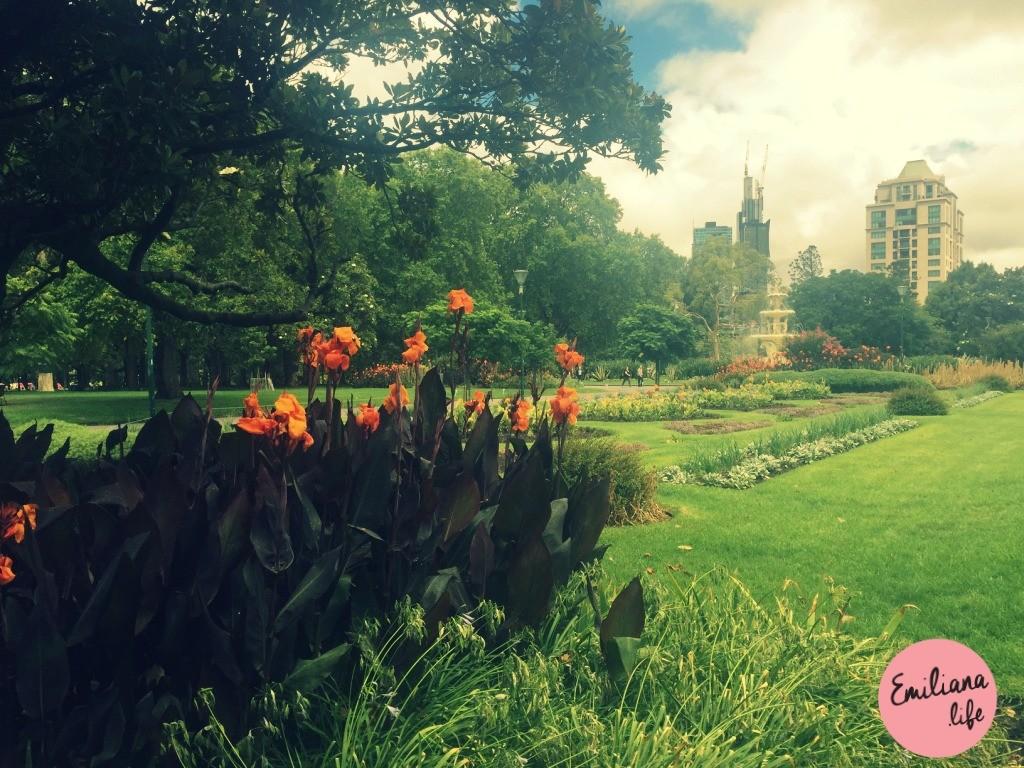 27 carlton gardens flores melbourne
