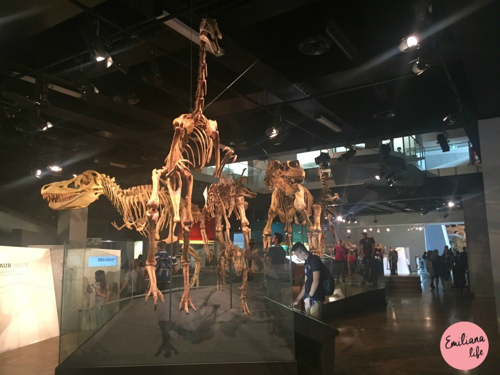 44 esqueleto dinossauros melbourne museum