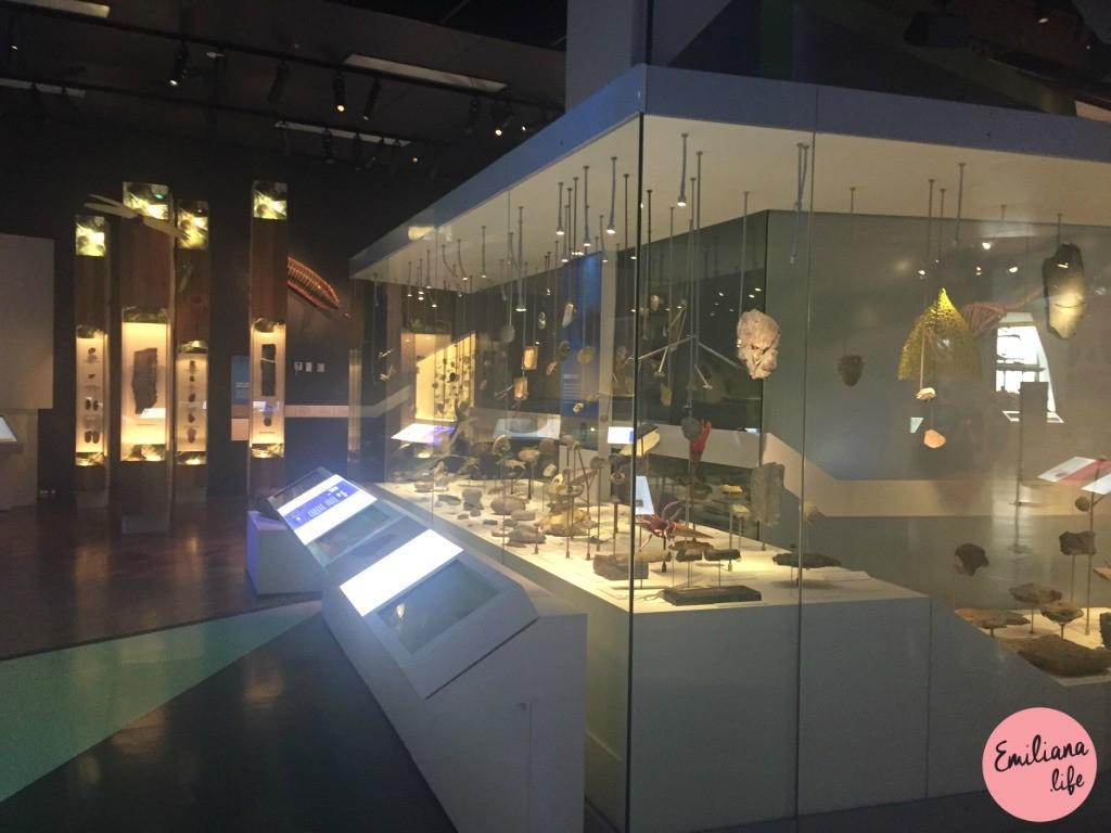 46 pedras melbourne museum